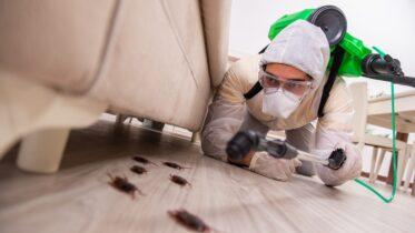 Pest Control Services in Cooper City FL